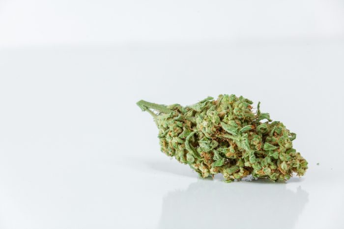 speed up legalization represented by cannabis nug on plain white background