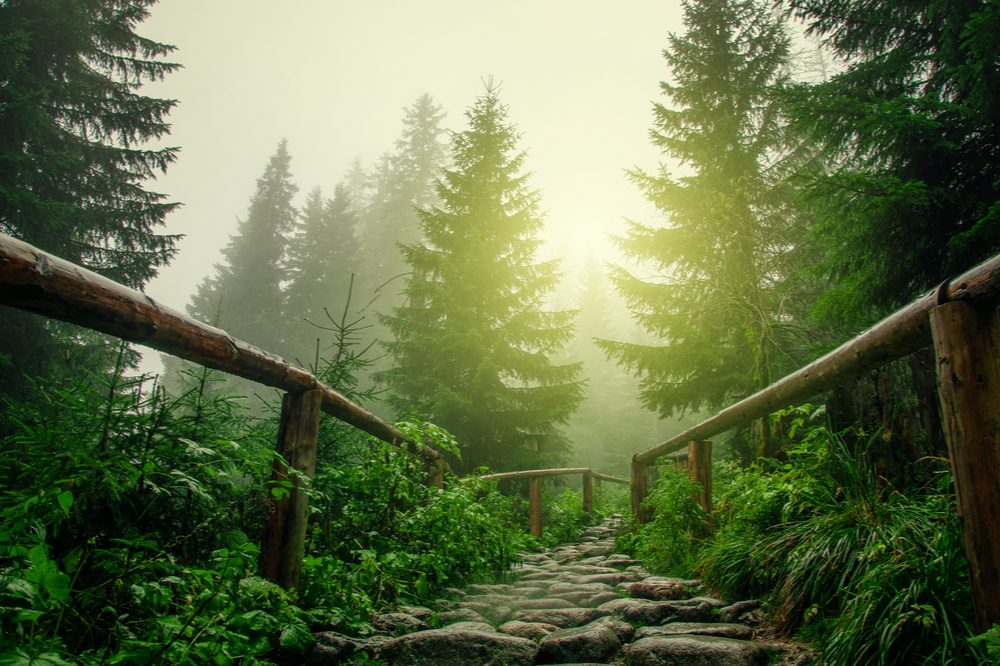 weed friendly represented by forest path with wood railings