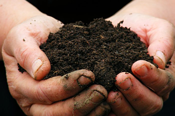 Bad Soil pH Can Destroy a Good Grow - Protect Your Cannabis