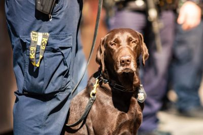 Drug Sniffing Dogs are Losing Their Jobs in Legalized Countries