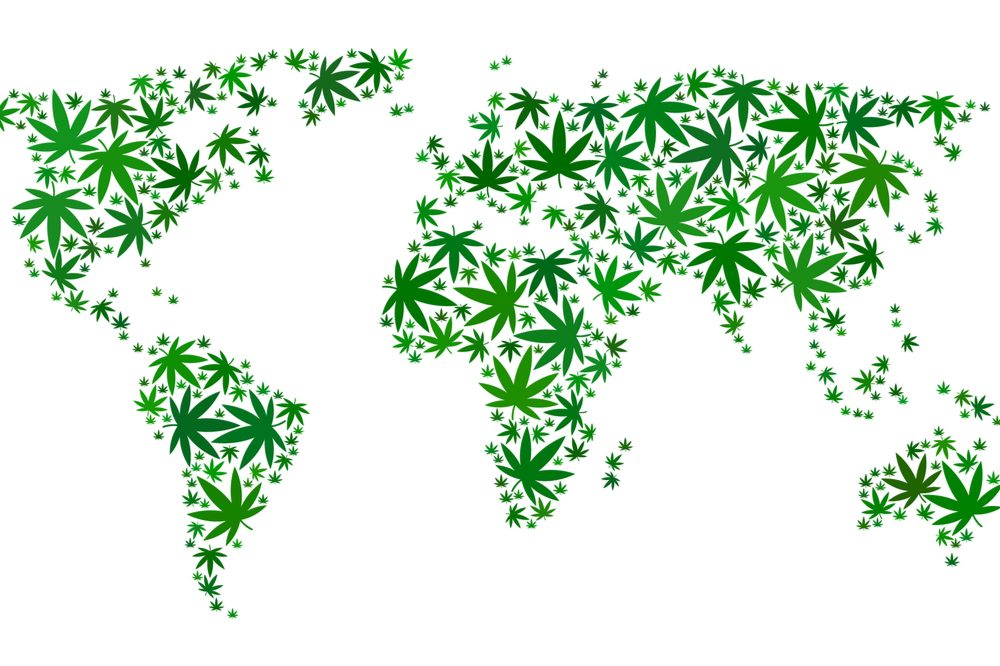 Will Upcoming WHO Vote on Cannabis Trigger Worldwide Legalization?