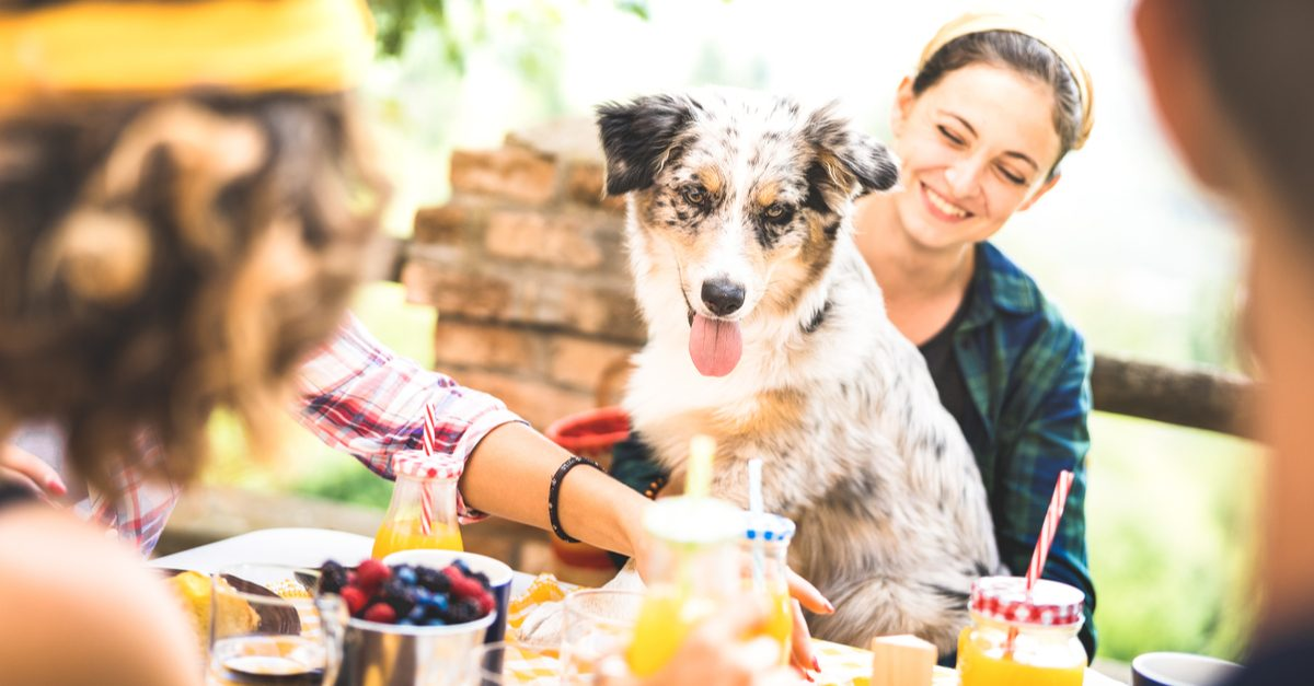 happy millenials with dog sit at a table eating healthy foods