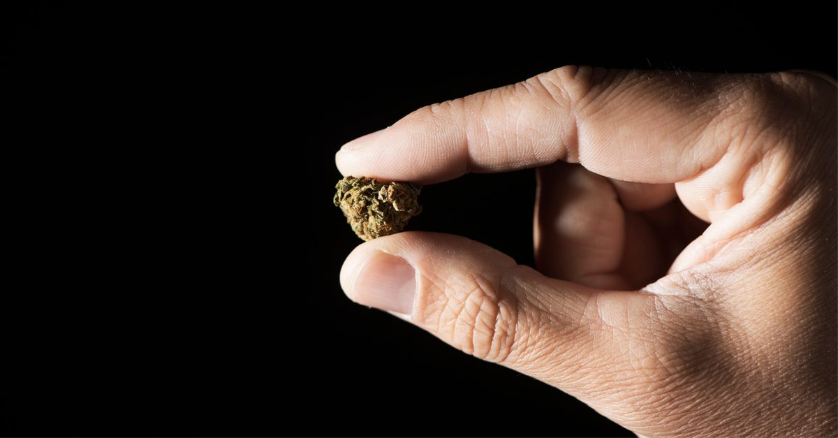 health of cannabis consumers represented by hand holding nug