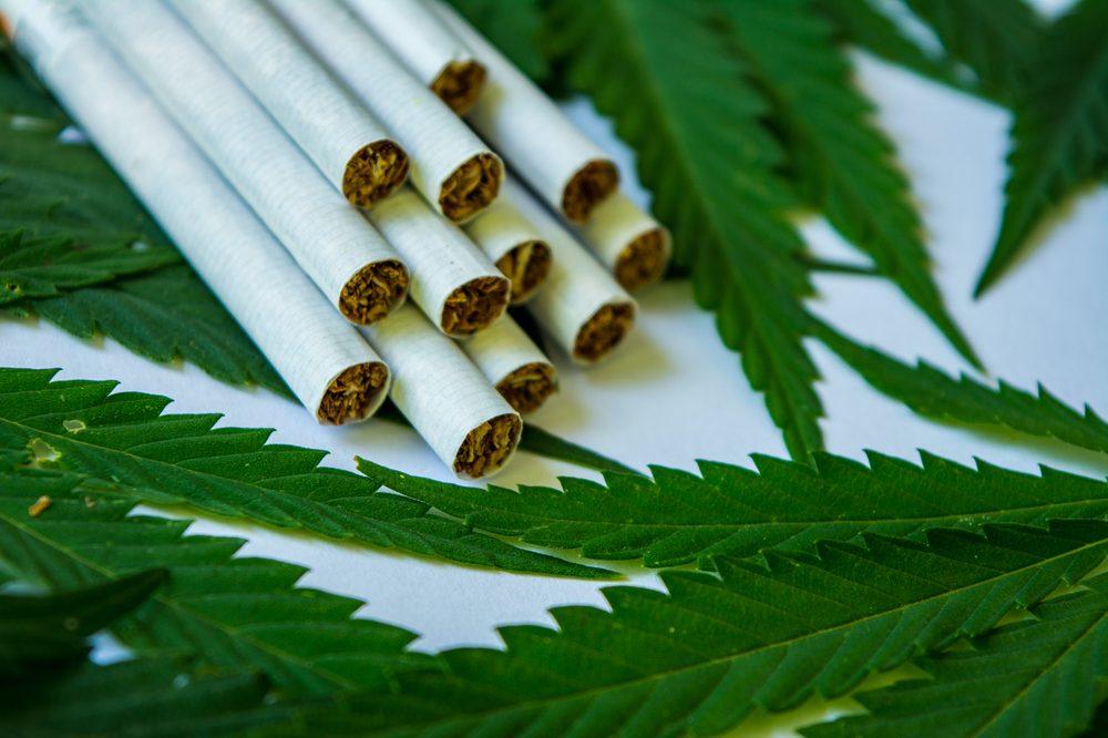 hemp cigarettes on hemp leaves