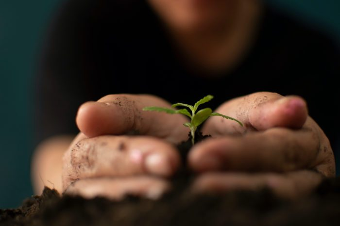New USDA Hemp Regulations are a Game Changer for Hemp Farmers