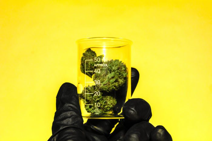 age of majority represented by gloved hand holding cannabis in beaker