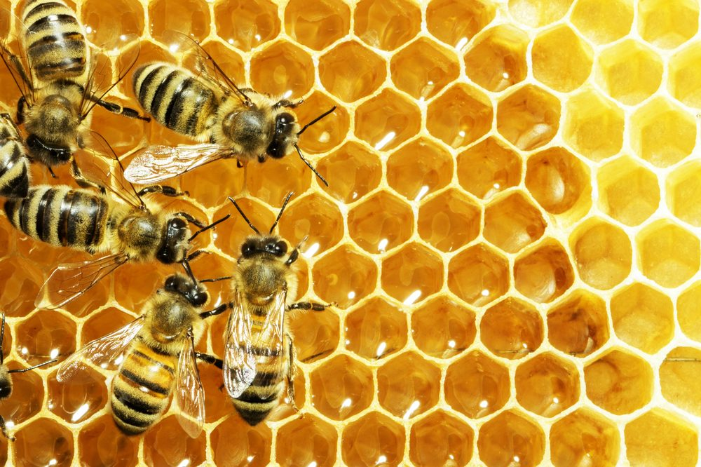 New Hemp Infusion Technology Gets the Buzz From the Bees