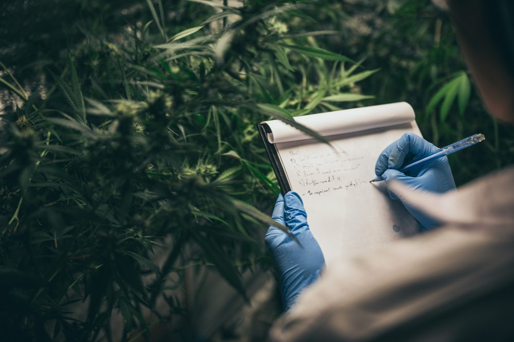 cannabis for cancer represented by researcher making notes in front of weed grow