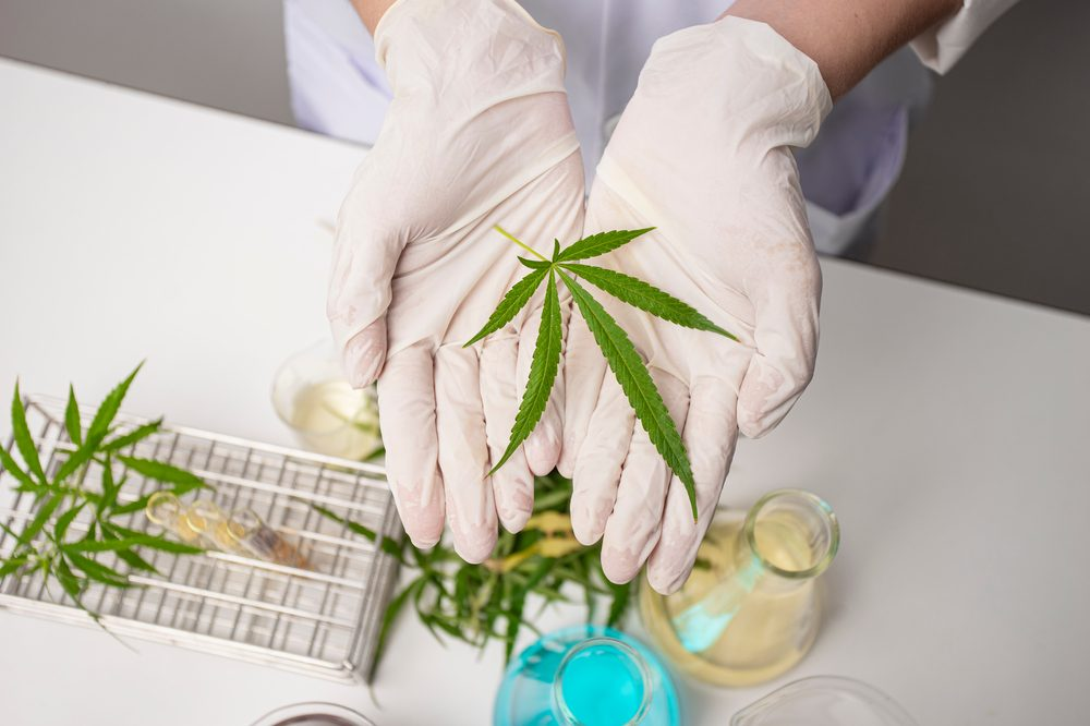 Cannabis Research in America represented by cannabis leaf in gloved hands