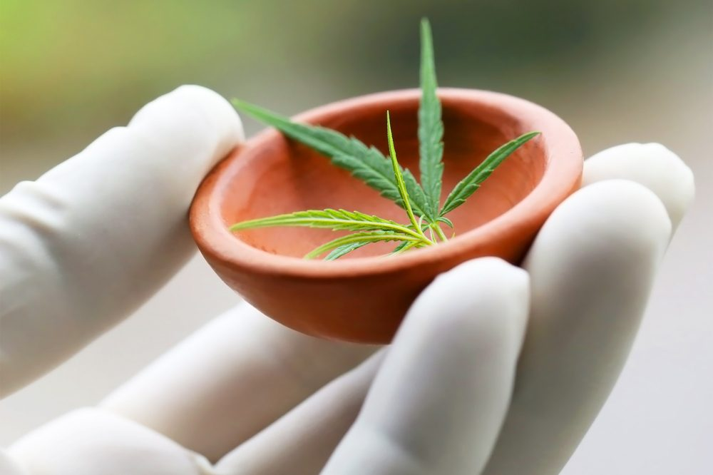 Cannabis Research in America represented by cannabis leaf in pestle