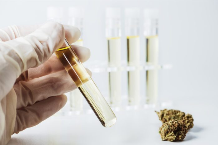 New FDA Guidelines for Cannabis Research in America