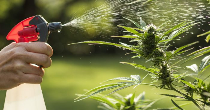 How to Practice Integrated Pest Management for the Best Buds