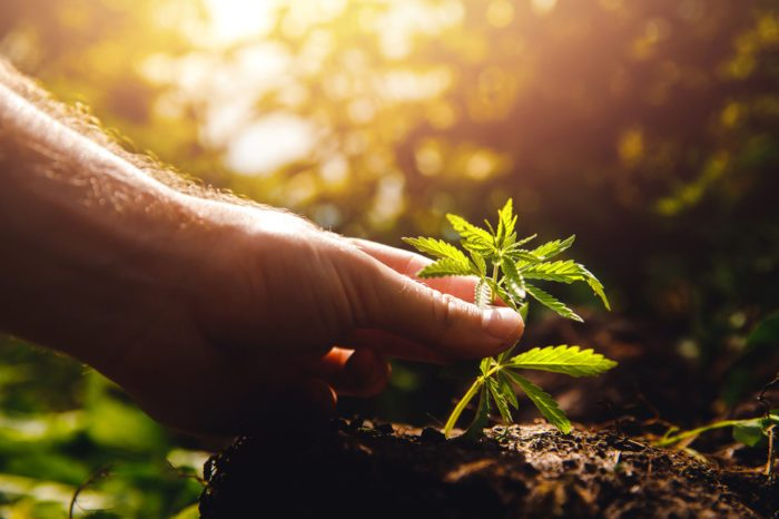 cbg news represented by hand holding seedling in ground