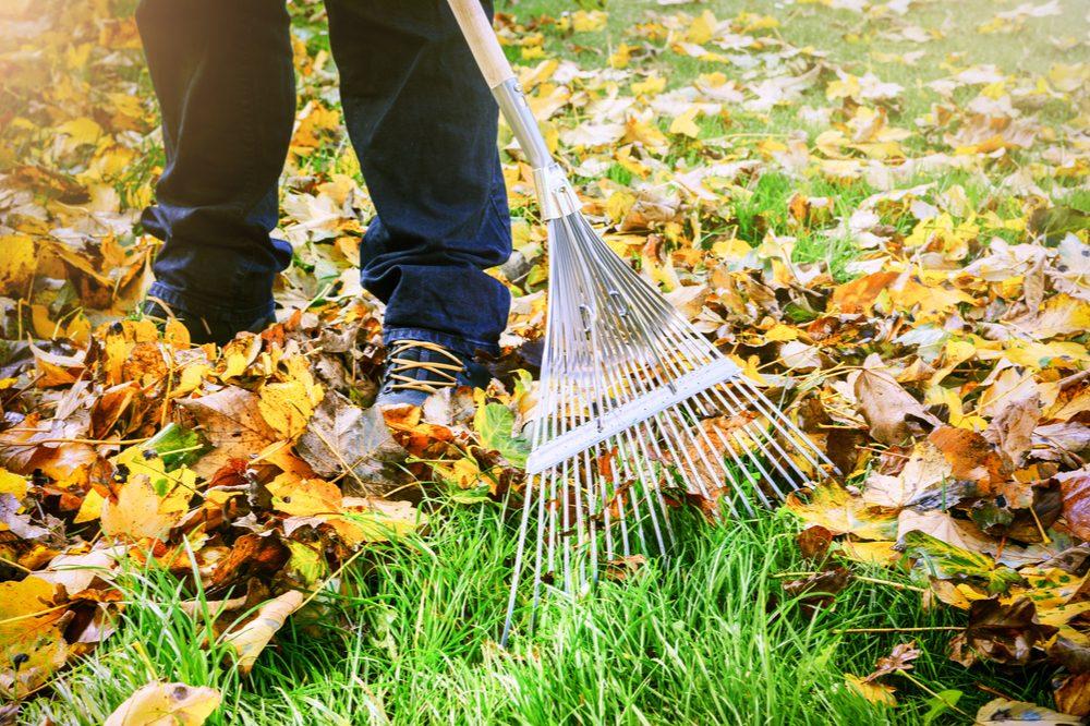 fall gardening represented by gardener raking leaves