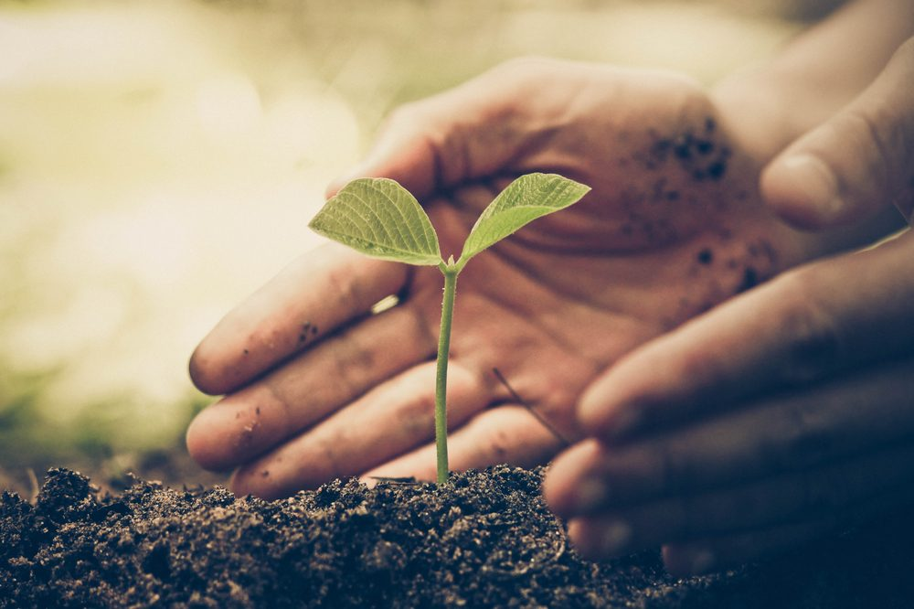 growing-cannabis represented by hands holding seedling