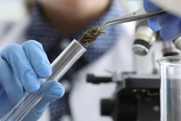 Test Cannabis With High Performance Liquid Chromatography (HPLC)