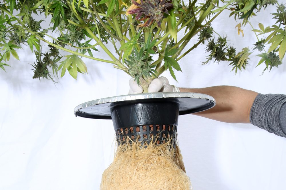Avoid These Problems in Your Hydroponics Grow