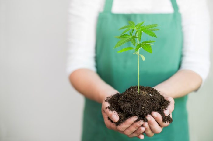 What Are The Best Types of Soil For Cannabis?