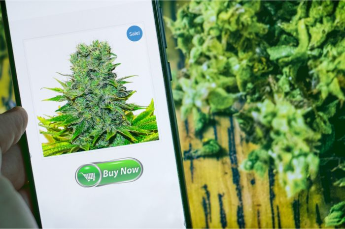How To Avoid Getting Scammed When You Buy Cannabis Online