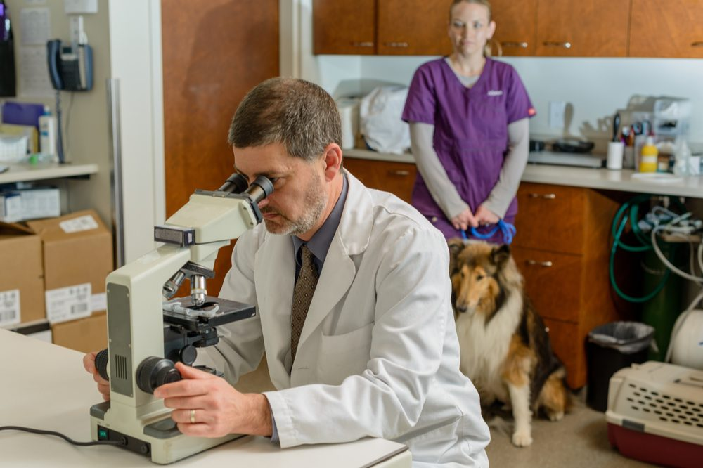 cbda for pets represented by white doc looking in microscope with border collie and assistant behind him