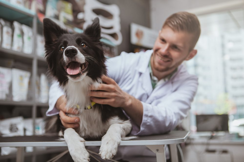 Could CBD Help Dogs Struggling With Seizures?
