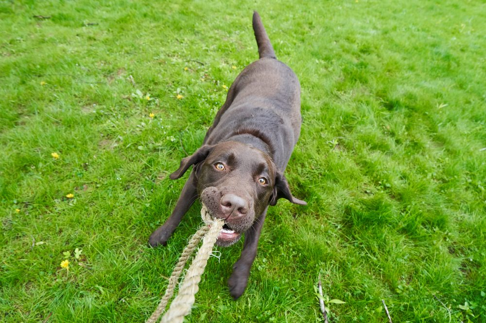 Make Your Own Natural Pet Toys: The Hemp Rope Edition
