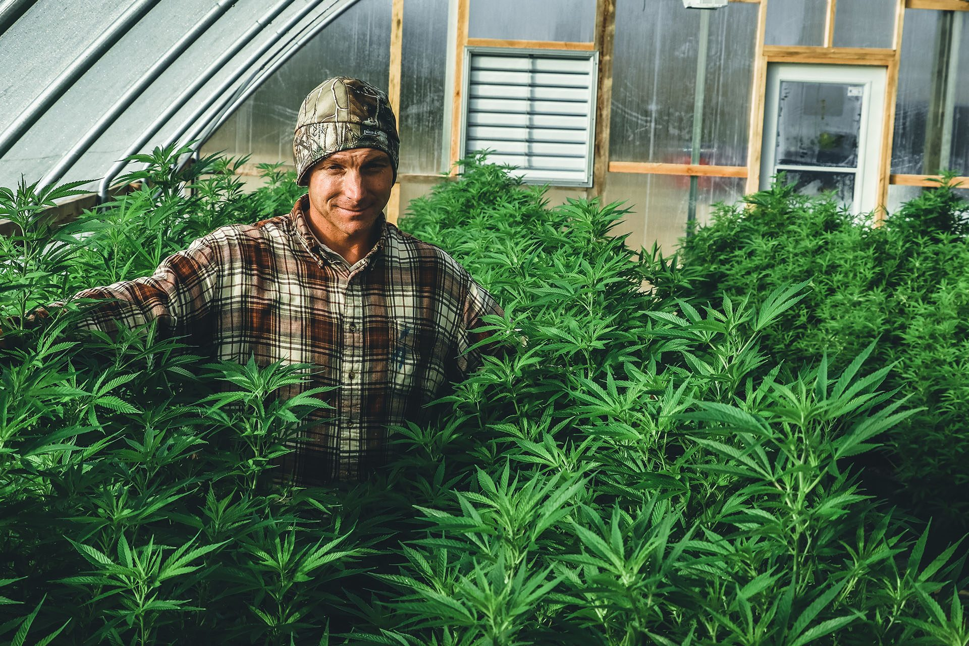 Male Cannabis Grower standing in cannabis filled greenhouse