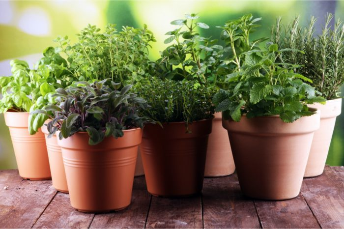 Growing Herbs to Combine with Cannabis - The Healing Garden