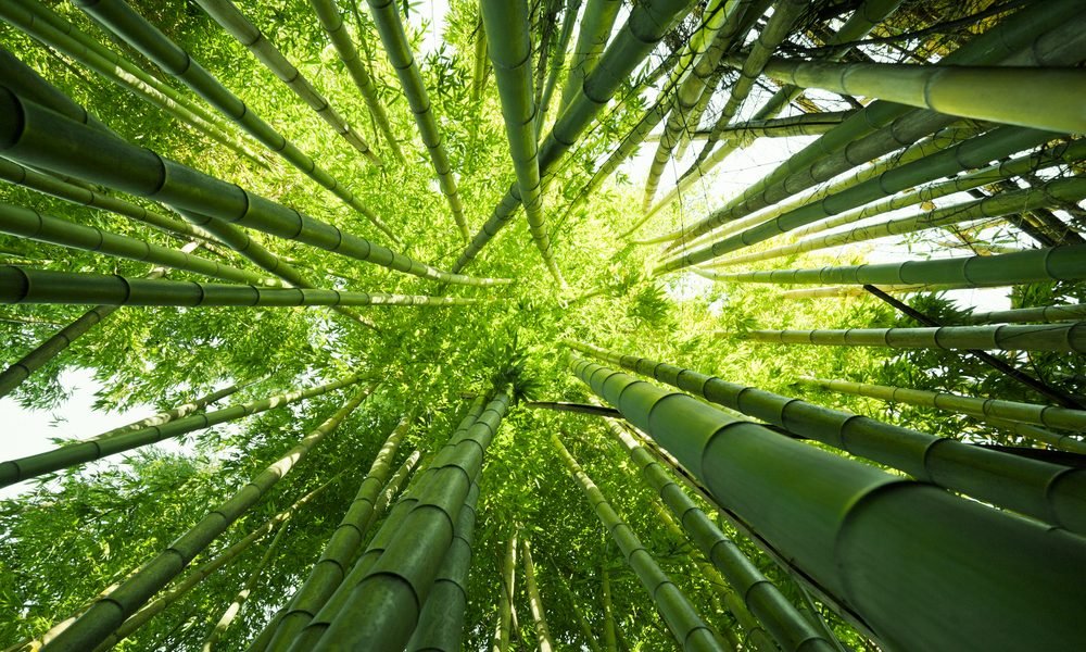 bamboo house represented by bamboo stalks