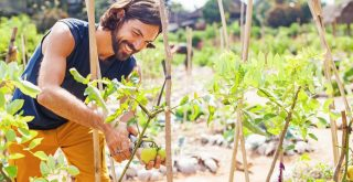 permaculture garden being tended by handsome young man